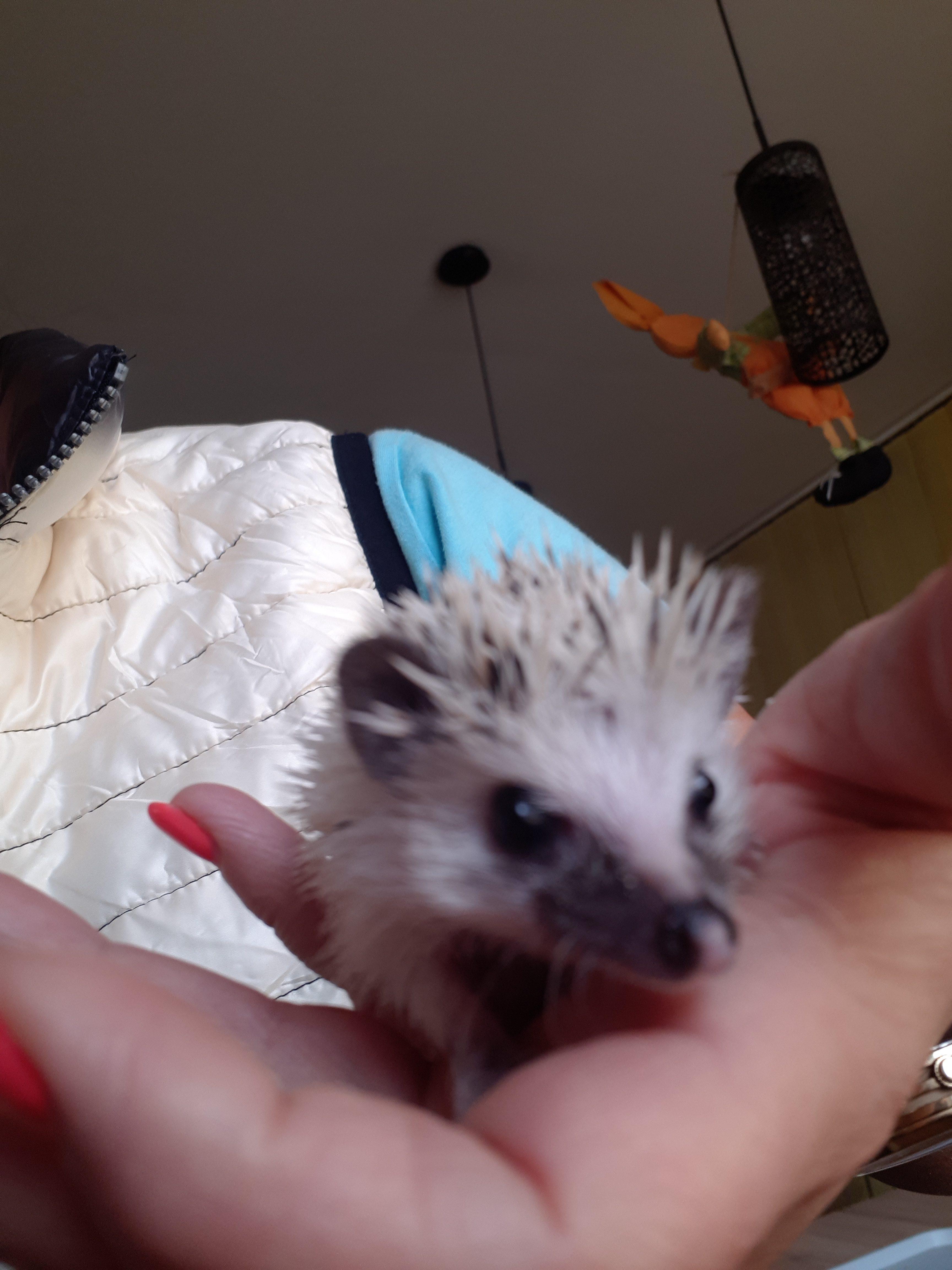 Az én kis sünim